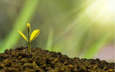 3 tips for building sustainable business growth
