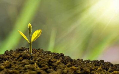 Giving your small business time to grow