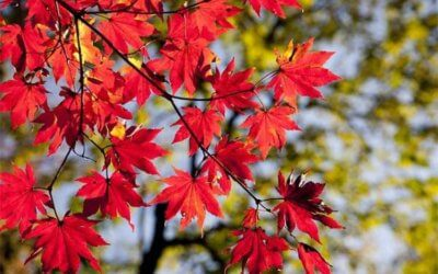 How small businesses can deal with seasonal fluctuations